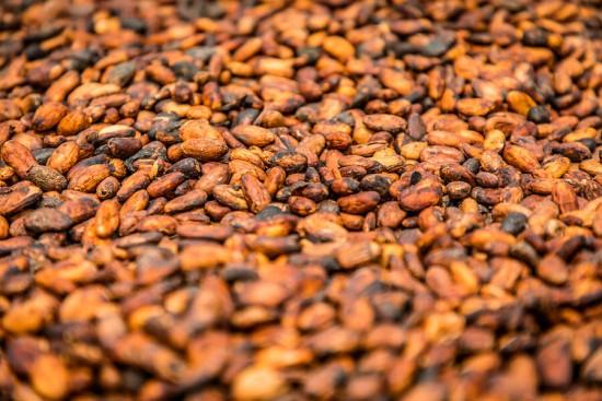 Vor allem in Côte d'Ivoire ist Kakao die wichtigste Deviseneinnahmequelle und der führende Agrarteilsektor.